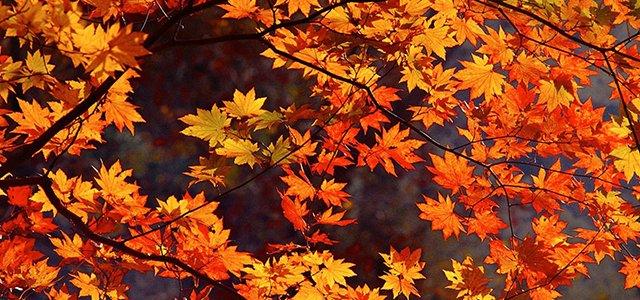 autumn leaves headline