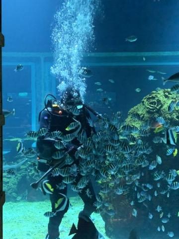 Apurva Kempinski hotel Bali - Dining Koral Restaurant